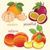 Fresh fruit mix , vector illustration. Set of fruit mix vector . Healthy eat. Passion fruit, mandarin and nectarine fruit. Natural organic food. Ingredients for Royalty Free Stock Photo