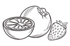 Fresh fruit nutrition healthy black and white hand drawn. Fresh fruit nutrition healthy orange and strawberry food and fitness diet options black and white vector illustration