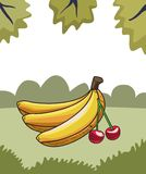 Fresh fruit nutrition healthy nature background. Fresh fruit nutrition healthy grouped bananas and cherry fitness diet options nature leaves background frame royalty free illustration