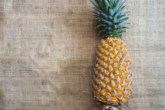 Fresh fruit pineapple healthy food. Fresh fruit pineapple or Ananas comosus is a tropical plant with an edible multiple fruit consisting of coalesced berries Stock Image