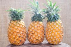 Fresh fruit pineapple healthy food. Fresh fruit pineapple or Ananas comosus is a tropical plant with an edible multiple fruit consisting of coalesced berries Stock Photos