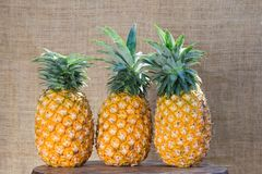 Fresh fruit pineapple healthy food. Fresh fruit pineapple or Ananas comosus is a tropical plant with an edible multiple fruit consisting of coalesced berries Royalty Free Stock Images
