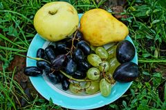 Fresh apple pear grapes and plums on a plate in the grass on the ground in the garden royalty free stock photos