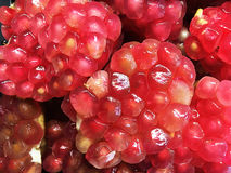 Fresh fruit Pomegranate open to reveal the clusters of juice. Stock Photography