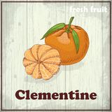 Fresh fruit sketch background. Hand drawing illustration of Clementine Stock Image