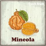 Fresh fruit sketch background. Hand drawing illustration of a mineola Stock Photo