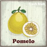 Fresh fruit sketch background. Hand drawing illustration of Pomelo Stock Photo