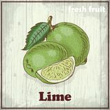 Fresh fruit sketch background. Vintage hand drawing illustration of Lime Royalty Free Stock Photos