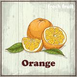 Fresh fruit sketch background. Vintage hand drawing illustration of orange Royalty Free Stock Photography
