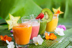 Fresh fruit smoothies Stock Image