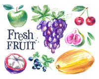 Fresh fruit vector logo design template. ripe food Royalty Free Stock Image