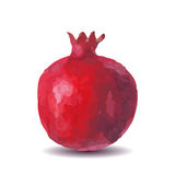 Fresh fruit watercolor pomegranate on a white background Royalty Free Stock Photo