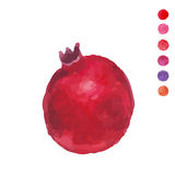 Fresh fruit watercolor pomegranate on a white background Royalty Free Stock Photography