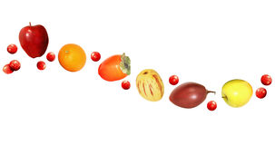 Fresh fruit wave design with apples, oranges, persimmons, and cranberries Royalty Free Stock Photo