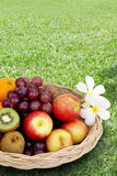 Fresh fruits in basket on lawn Stock Photography