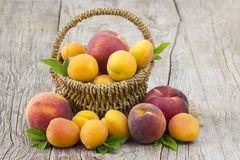 Fresh fruits in a basket Royalty Free Stock Photo