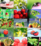 Fresh fruits and berries. Close up Stock Photography