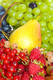 Fresh fruits and berry. Stock Photos