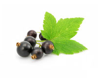 Fresh fruits of black currant with leaf on white Royalty Free Stock Photo