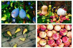Fresh fruits. Collage of fresh and juicy fruits royalty free stock photo