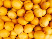 The fresh fruits from garden concept. Many oranges are filled un Stock Photography