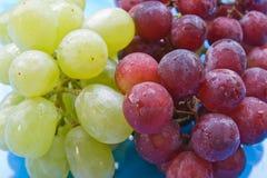 Fresh fruits Stock Image