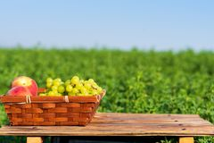 Fresh fruits grapes and peaches on basket outside on the green meadow and blue sky background at sunny summer day. royalty free stock images