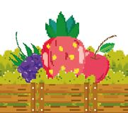 Fresh fruits pixelated cartoons. Fresh fruits inside wooden box pixelated cartoons vector illustration graphic design Stock Illustration