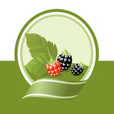 Fresh fruits label. Fresh blackberry illustration, green vector label Royalty Free Stock Images