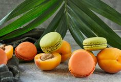 Fresh fruits and macaron on the background of a palm branch royalty free stock photography