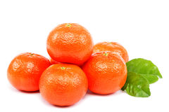 Fresh fruits mandarin oranges. Stock Image