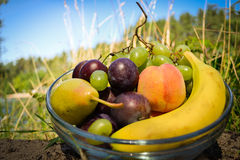 Fresh fruits. Fresh orgsnic fruits, hand take pear stock photography