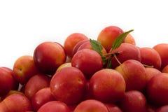Fresh fruits of plums Stock Photos