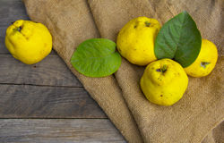 Quince. Fresh fruits,  quince from garden, autumn harvest Royalty Free Stock Photos