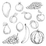 Fresh fruits sketches for food design Stock Images