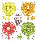 Fresh fruits slices. Lemon and lime, orange Royalty Free Stock Image