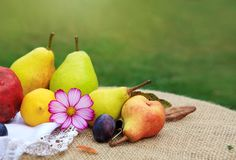 Fresh mixed fruits on brown tablecloth isolated on green background. Royalty Free Stock Images