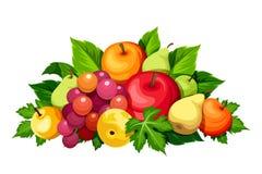 Fresh fruits. Vector illustration. Stock Photography