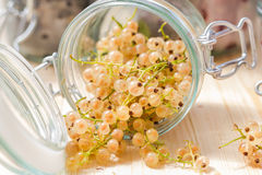 Fresh fruits white currants jars preparations Royalty Free Stock Photography