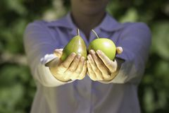 Fresh fruits in woman's hands. Stock Images