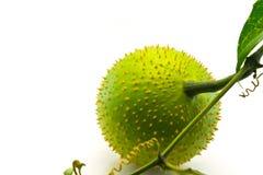 Fresh gac fruit Stock Photography