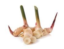Fresh Galanga with stem on white Stock Photos