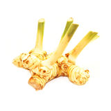 Fresh galangal isolated on white background Royalty Free Stock Image