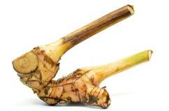 Fresh galangal root Stock Photos