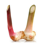 Fresh galangal on white background Royalty Free Stock Photos