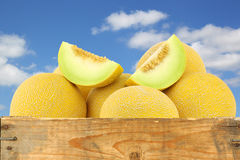 Fresh galia melons and a cut one Royalty Free Stock Image