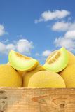 Fresh galia melons and a cut one Royalty Free Stock Photo