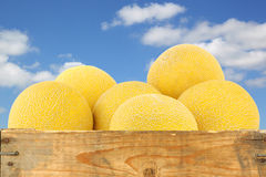 Fresh galia melons in a wooden crate Stock Images