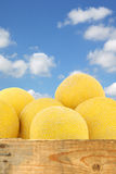 Fresh galia melons in a wooden crate Royalty Free Stock Photography