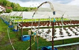 Fresh garden. Stock Photo